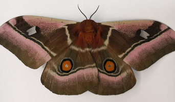 Squeak Pest Moth Pest control Melbourne