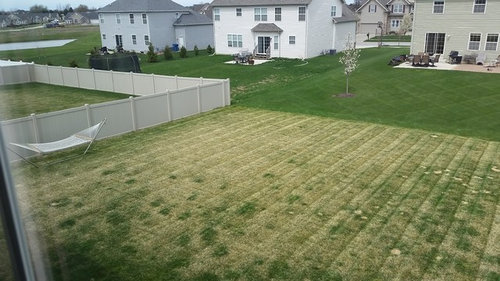Help My Lawn Isn T Paring In Spring