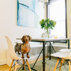 Pet's Place: Dave the Dachshund Settles Into His Manhattan Home