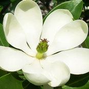 Susan Nieves - Happy Ohio Gardener's photo