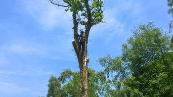 tree-tek