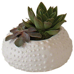 Contemporary Indoor Pots And Planters by GLOBAL VIEWS