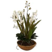 Uttermost 60039 Moth Orchid Planter