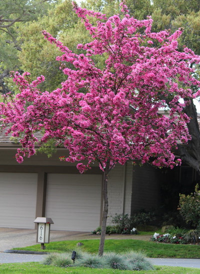 7 spectacular and practical spring flowering trees practical spring flowering trees mightylinksfo