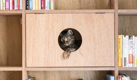 猫と暮らす住まいづくりで、押さえておきたい基本のポイント