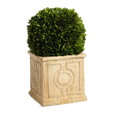 """Cinzia"" 14"" Tall Preserved Boxwood Topiary"