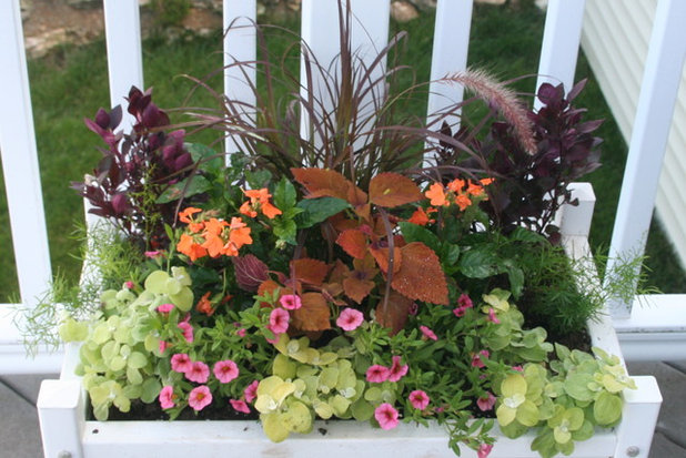 Container Gardening Basics: The Dirt On Soil