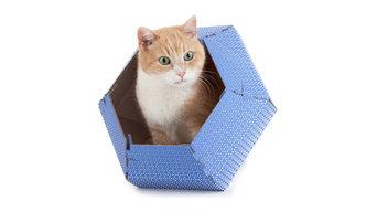 Cat in the Box - Cuccie in cartone per gatti e cani di piccola taglia