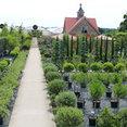 Architectural Plants Ltd's profile photo