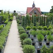 Architectural Plants Ltd's photo