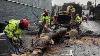 Emergency tree removal.