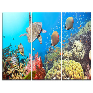 """Undersea Panorama"" Photography Canvas Print, 3 Panels, 36""x28"""