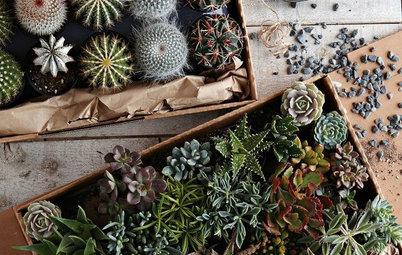 Guest Picks: An Arsenal for Urban Gardeners