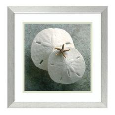 "Framed Art Print 'Sand Dollars' by Glen & Gayle Wans, Outer Size 18""x18"""
