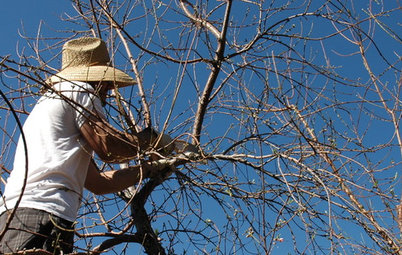 How to Prune Your Fruit Trees in Winter