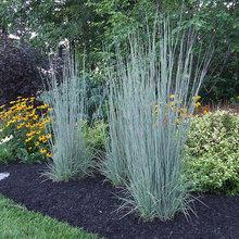 Landscape Plants for Ohio