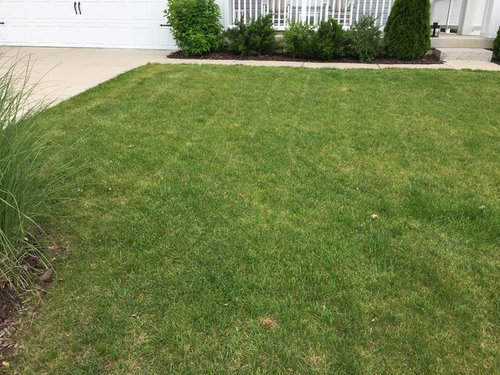 Need suggestions for thin lawn, soil sample results