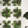 Откуда корни растут: Нестандартные идеи озеленения дома