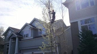 Tree Work Jobs In Progress