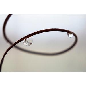 """""""Drops of Dew"""" Photo Print, Art Poster, 40x30 cm"""