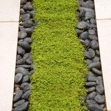 Planted Rills - Charlotte Rowe Garden Design