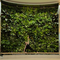 Exceptional Greenwall. 1 Photo. 2 Ideabooks For Botanicus Interior Landscaping