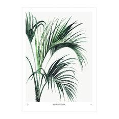 """Botanic Print, """"Howea"""", Medium, 40 x 50 cm"""