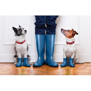 Dogs in Wellies Gallery Door Mat, Small