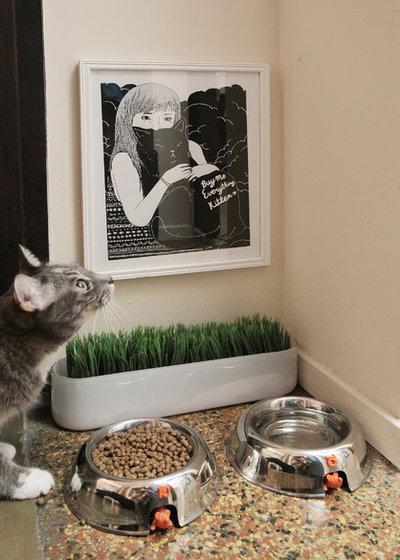 10 Einrichtungsideen Die Katzen Glücklich Machen