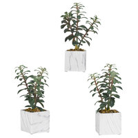 Tree Succulents, White Marbled Ceramic Cube, Set of 3