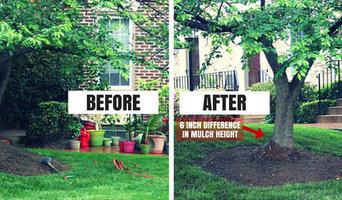 Root Collar Excavation & Root Pruning