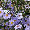 Some of the Best Plants to Add Colour to the Garden in Autumn
