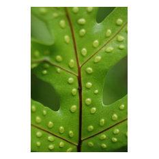 Fine Art Photograph, Spotted Leaf I, Fine Art Paper Giclee