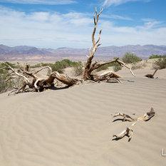 """- Photographie sur papier d'art ou toile canvas""""Dead Valley 3"""" - Photographie"""