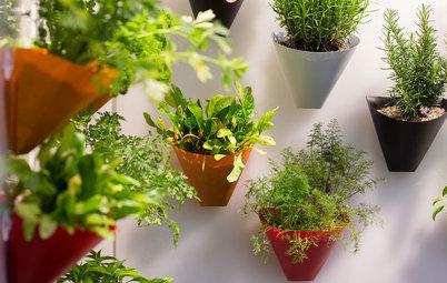 5 Idee per Mini Orti Aromatici in Cucina