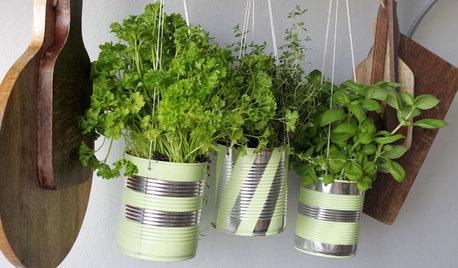 DIY : Recyclez vos conserves pour cultiver des herbes aromatiques