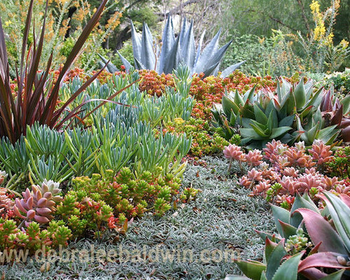 Succulent Garden Ideas photo of an eclectic landscape in san diego Photo Of An Eclectic Landscape In San Diego