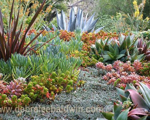 Succulent Garden Houzz