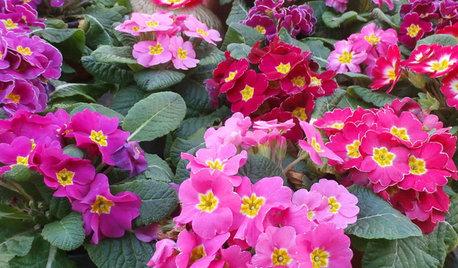 Pregunta al experto: Cómo cuidar y vivir el jardín en febrero