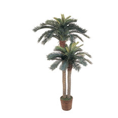6 ft. and 4ft. Sago Palm Double Potted Silk Tree
