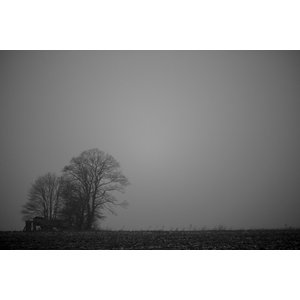 Trees in the Fog Black and White Fine Art Print, 75x50 cm