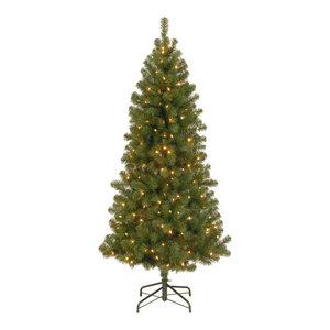 7 5 Canadian Grande Fir Tree
