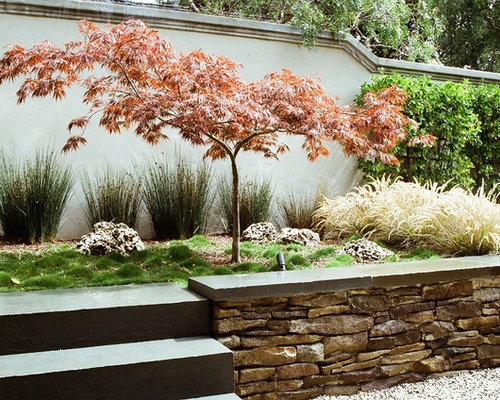 Japanese maple garden design ideas remodel pictures houzz for Garden design with japanese maple