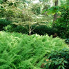 Ferns: A Shade Gardener's Best Friend