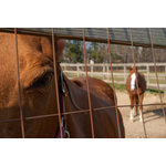 "Pi Photography Wall Art and Fine Art - Fenced In Horse Photograph Unframed Wall Art Print, 24""x36"" - Fenced In Horse Photograph - Luster Photo Paper Unframed Wall Art Print"