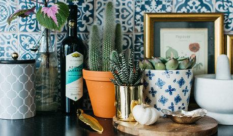 5 Favorite Succulents to Grow Indoors