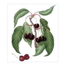 """Dark Cherry Plum"" Gallesio Botanical Print, 42x48 cm"