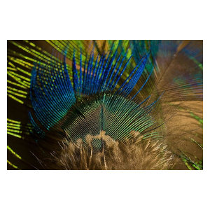 Peacock Feather Wallpaper Wall Mural Self Adhesive Contemporary Wall Decals By Magic Murals Llc
