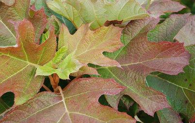 Northeast Gardener's November Checklist