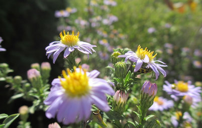 Plant These Fall-Flowering Natives in Early Summer for Pollinator Love